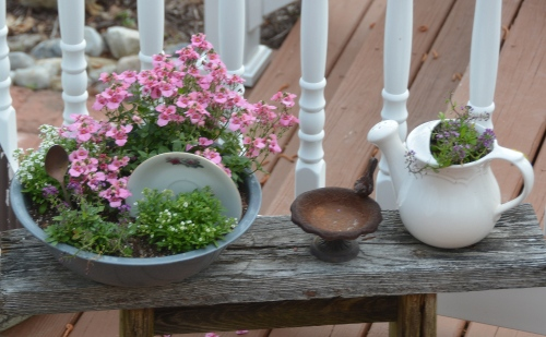 dish garden 5-10-2015 8-24-27 AM