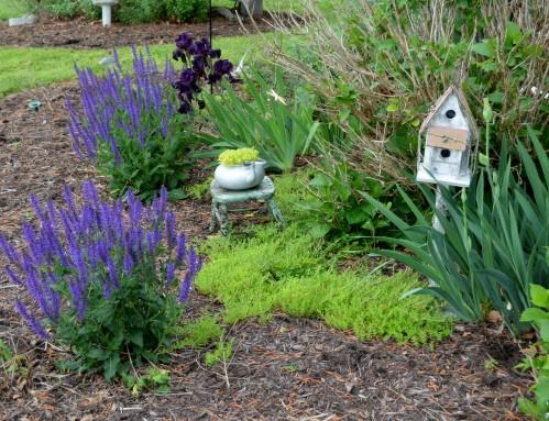 garden 5-10-2015 8-25-27 AM