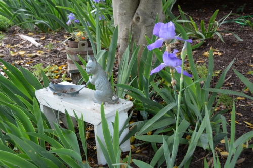 iris and kitty on bench 5-10-2015 8-26-58 AM 5-10-2015 8-26-58 AM