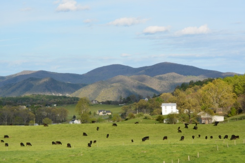 mountains and cows 5-2-2015 6-15-44 PM