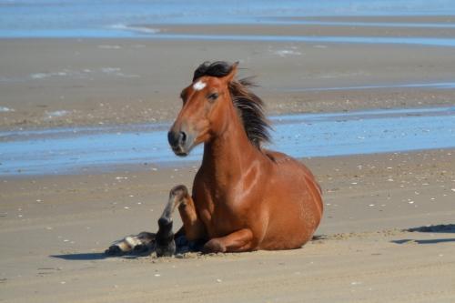 horse sitting 6-6-2015 4-01-38 PM