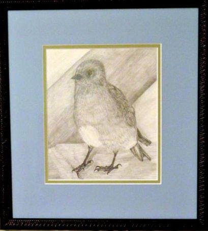 matthew'sbird