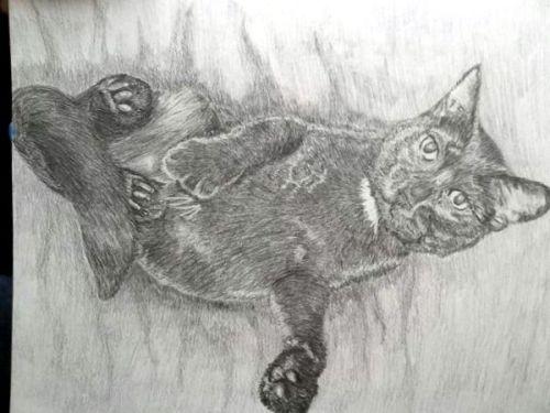 matthewscat
