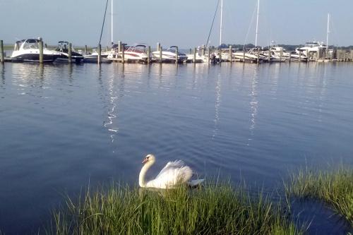 new swan