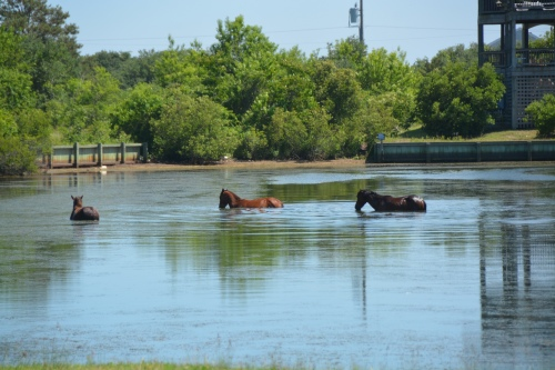 three in the canal 6-6-2015 3-11-25 PM