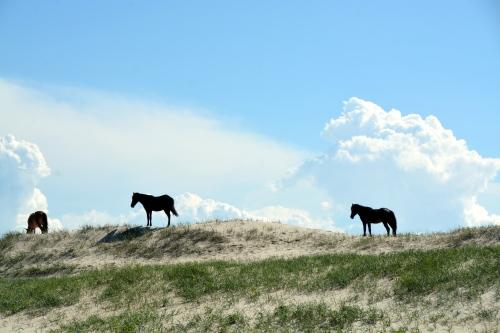 three on the dunes 6-6-2015 3-54-34 PM 6-6-2015 3-54-34 PM