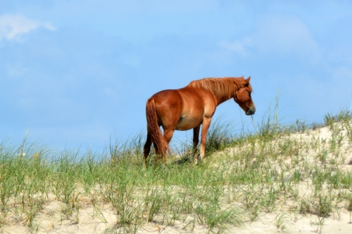 horse on dune 7-4-2015 11-06-49 AM