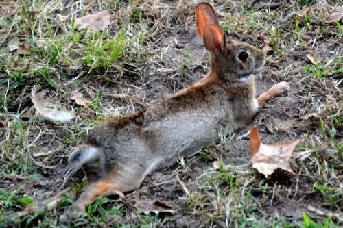 bunny1 8-3-2015 6-39-12 PM 8-3-2015 6-39-12 PM