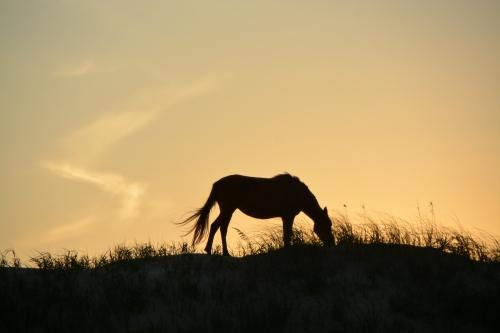 horse silhouette 8-22-2015 7-24-20 PM