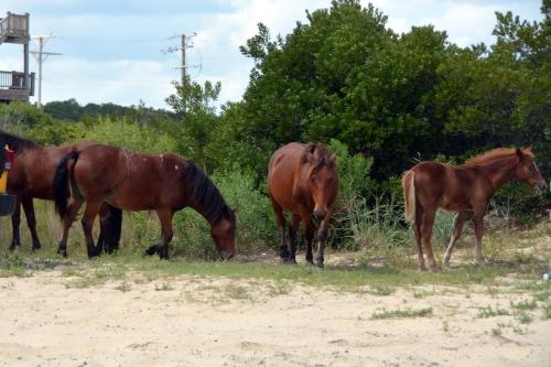 horses 1 9-10-2015 1-42-21 PM