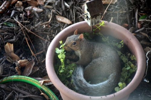 squirrel best 9-9-2015 3-43-03 PM
