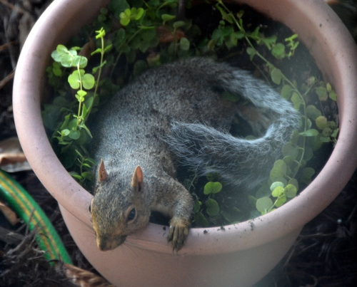 squirrel1 9-9-2015 3-43-19 PM