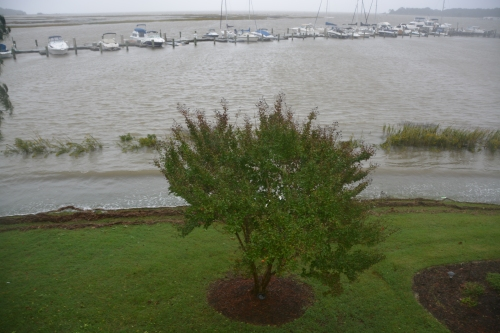 crape myrtle highest tide 10-4-2015 1-26-56 PM