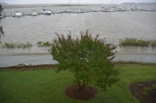 crape myrtle highest tide 10-4-2015 1-26-56 PM