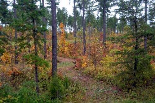 foliage 10-10-2015 11-31-10 AM
