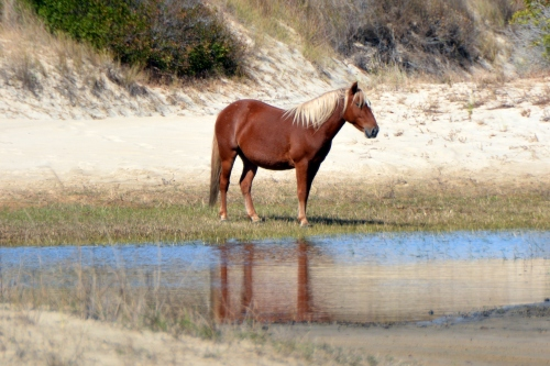 horse by water 10-24-2015 11-53-22 AM