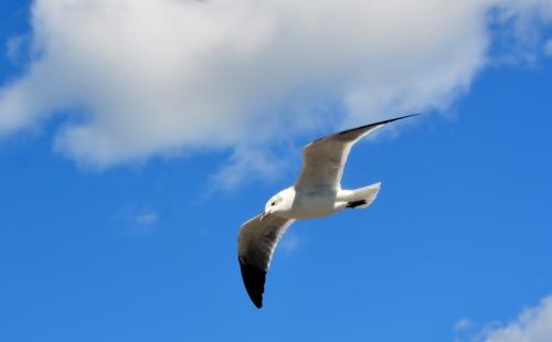 seagull best 10-18-2015 1-33-16 PM 10-18-2015 1-33-16 PM