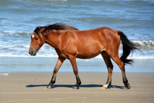 horse 6-6-2015 4-04-04 PM