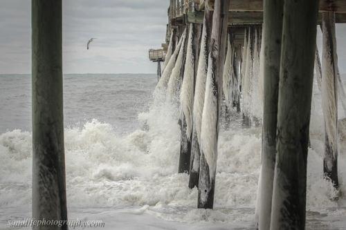 Courtesy Sandlife Photography