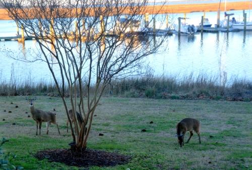 deer 1-14-2016 4-45-06 PM