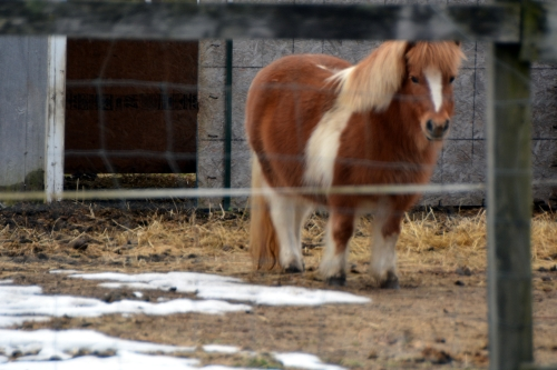 mini pony 1-28-2016 2-46-45 PM