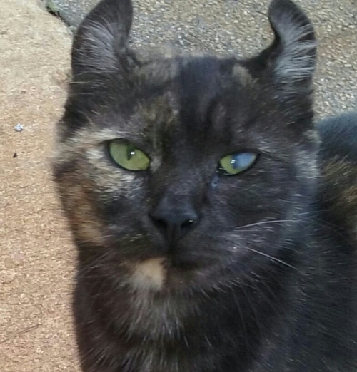 curl eared kitty 10-20-2015 1-38-14 PM