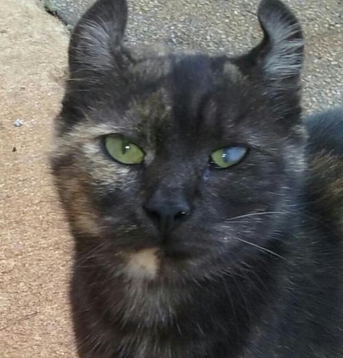 curl eared kitty 10-20-2015 1-38-14 PM