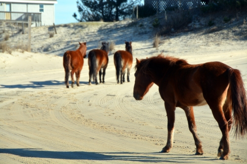 girls and stallion 1-30-2016 2-36-30 PM
