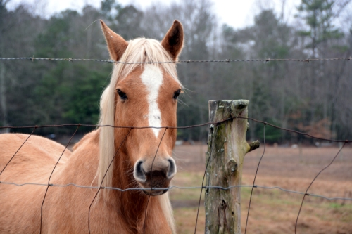 horse1 12-17-2015 11-30-52 AM