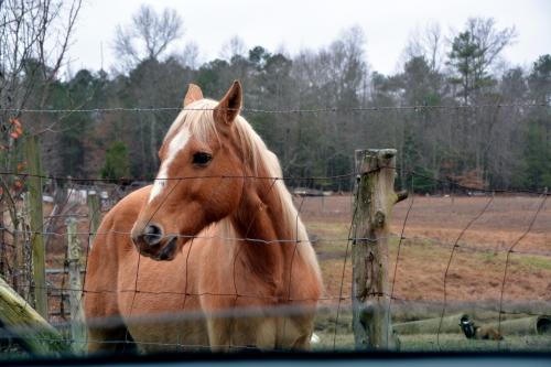 horse2 12-17-2015 11-30-54 AM