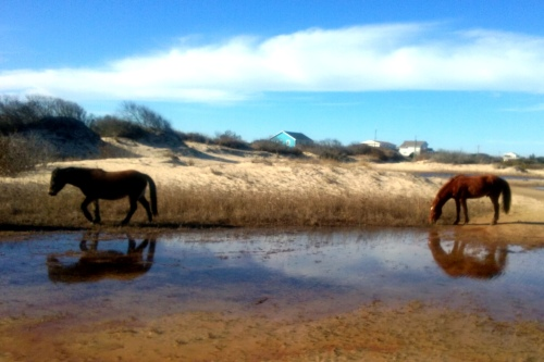 horses by water best 1-30-2016 2-32-49 PM