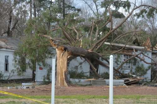 tree on house 2-25-2016 2-57-26 PM