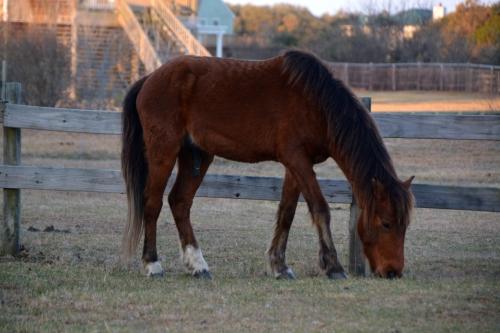horse 3-24-2016 7-28-21 AM