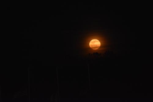 jrs moon 3-23-2016 7-52-36 PM