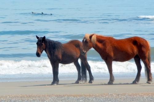 2 horses 3 fins 4-23-2016 12-56-36 PM
