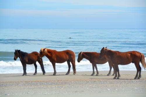 4 horses 1 fin 4-23-2016 12-56-51 PM