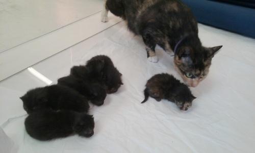 Mom&kitties-001