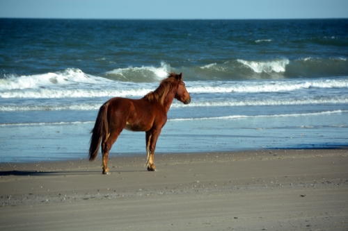 stallion on the beach 1-30-2016 2-47-53 PM