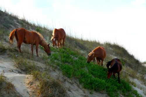 4 on dune 5-8-2016 4-53-32 PM