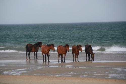 5 horses 6-12-2016 6-26-14 PM