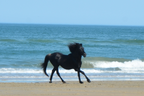 black stallion running 5-25-2016 4-11-22 PM
