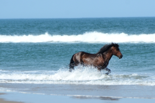 horse splash 5-25-2016 4-12-13 PM