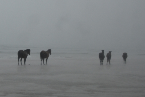 horses in pouring rain 6-12-2016 6-37-26 PM