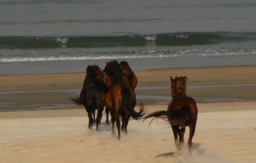 horses running 6-12-2016 6-22-13 PM