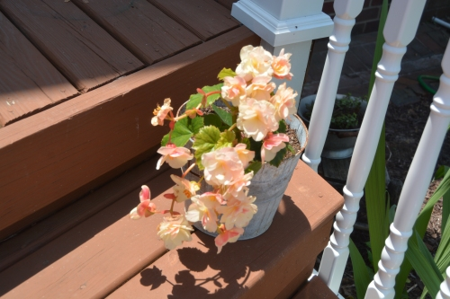 peach begonia 6-14-2016 1-22-30 PM