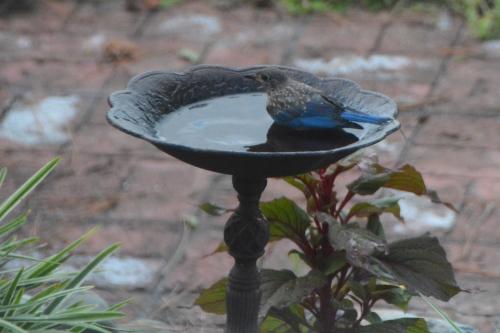bird 8-1-2016 7-50-38 PM