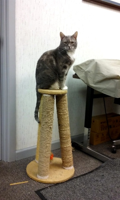 gypsy on scratching post