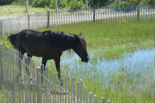 horse by water 8-11-2016 3-20-06 PM