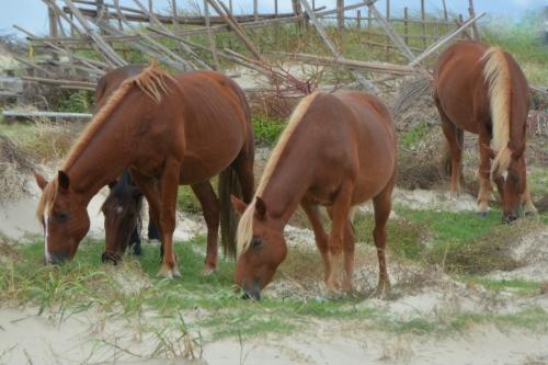 4-horses-2-9-22-2016-12-15-26-pm-9-22-2016-12-15-26-pm