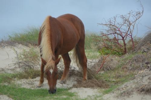 horse1-9-22-2016-12-14-46-pm